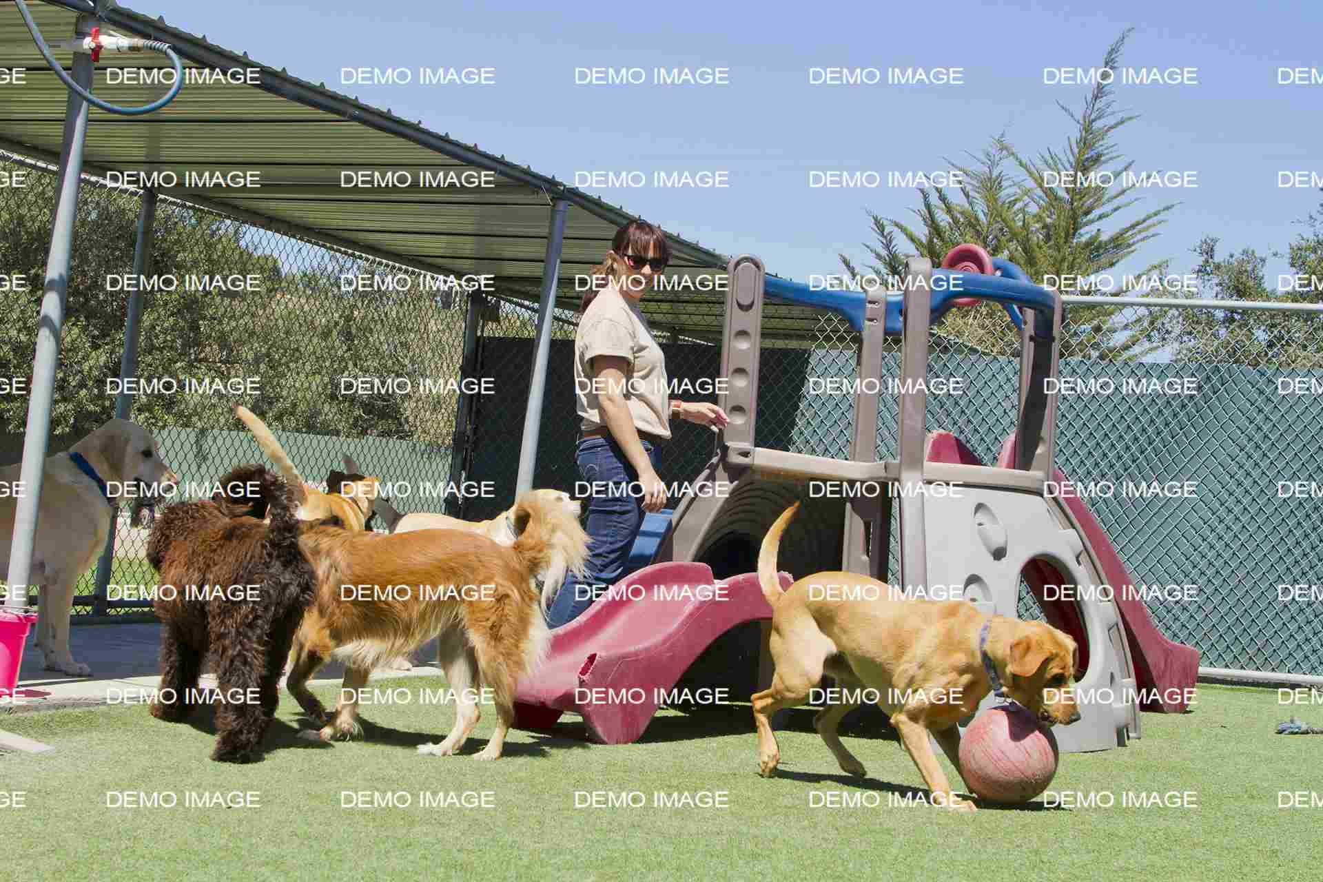 Veterinary Supervision